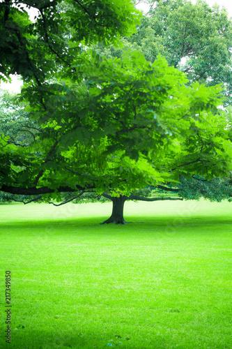 Piękna zieleń bujny lato drzewo i zielona trawa
