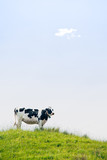 Black and White Cow Standing on Top of the Meadow in Summer
