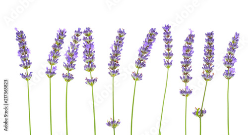 Foto Spatwand Lavendel Lavender flowers isolated on white background.