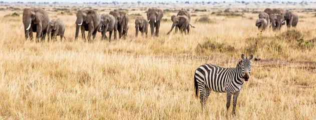 Zebra and Elephants Safari Web Banner