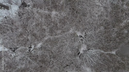 Top View of a Bare Forest Covered in Snow