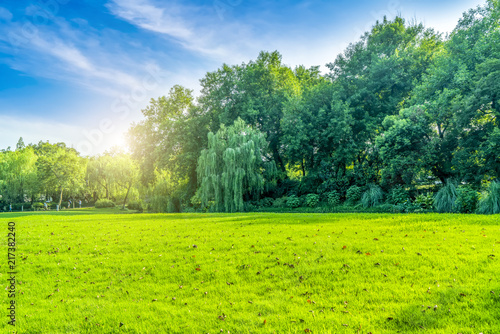 Plexiglas Lime groen Grass and green woods in the park