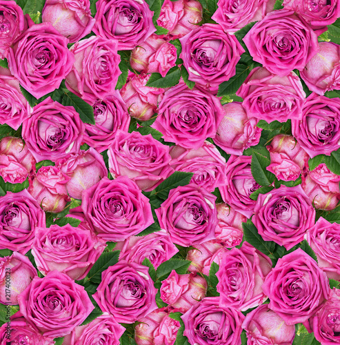 Pink rose flowers - 217400823