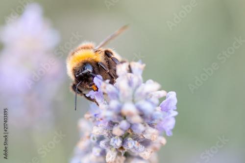 In de dag Bee Honey Bees