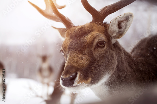 Fotobehang Natuur Deer close-up
