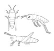 Insect Set Cute Grasshopper Cartoon Vector Coloring Book