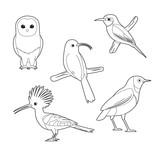 African Bird Coloring Book Owl Hoopoe Starling Bee-eater Cartoon Vector Set