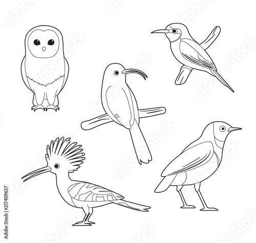 Fotobehang Uilen cartoon African Bird Coloring Book Owl Hoopoe Starling Bee-eater Cartoon Vector Set