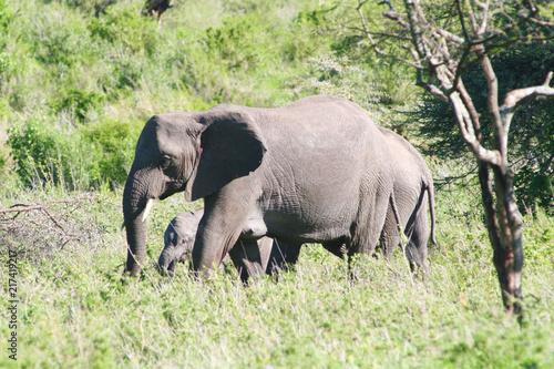 Elefantenfamilie läuft durch den Serengeti Nationalpark Tansania