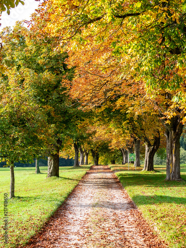 Foto Murales Trees with colored autumn leaves on the countyside. alley