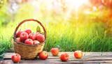 Red Apples Of Basket In Garden - Harvest Concept