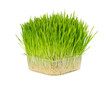 Fresh grass for cats in plastic box isolated on white