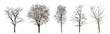 Quadro Set of winter trees without leaves isolated on white background