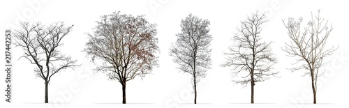 Set of winter trees without leaves isolated on white background - 217442253