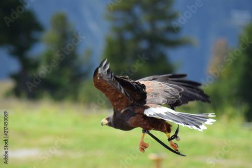 Foto Murales bird of prey