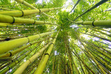 Bamboo forest in Thailand in Southeast Asia