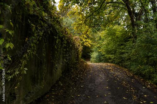 Fotobehang Weg in bos Dolny Kubin vives