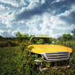 Old car inside the thickets of grass