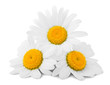 Leinwanddruck Bild - chamomile isolated on white background, clipping path, full depth of field