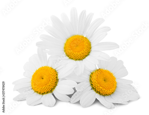Leinwanddruck Bild chamomile isolated on white background, clipping path, full depth of field