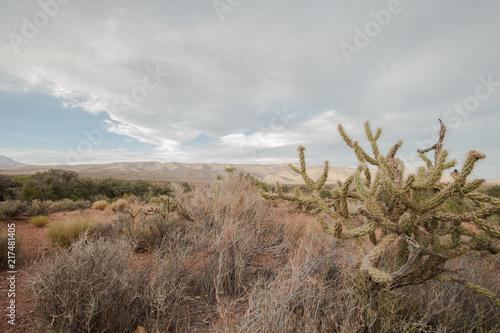 Canvas Cappuccino cactus in Vegas