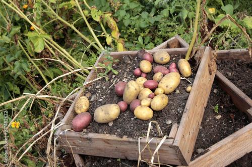 Foto Murales gute Kartoffelernte 2018