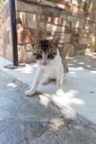 Chat dans Cyclades en Grèce