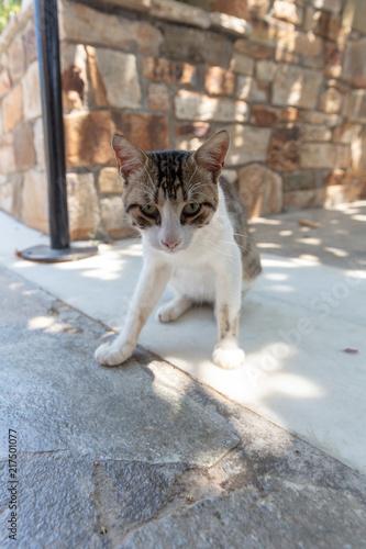 Foto Spatwand Kat Chat dans Cyclades en Grèce