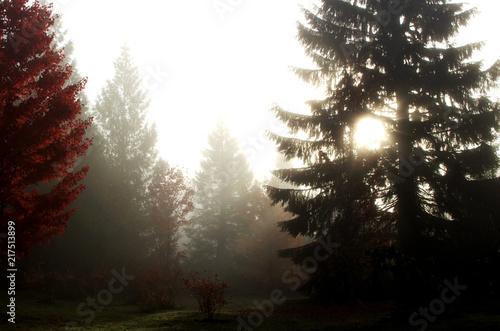 Fotobehang Herfst foggy day