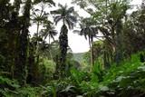 南国熱帯雨林の森
