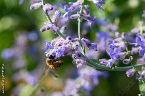 In de dag Bee bee in blues flowers