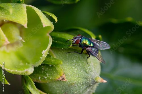 Foto Murales fly2