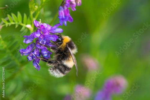 In de dag Bee summer