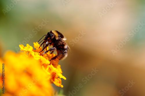 In de dag Bee abeille qui butine