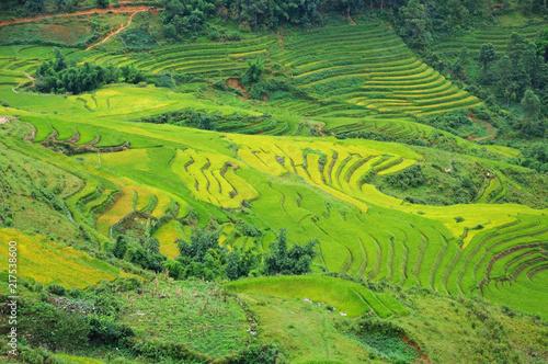 Canvas Pistache Landscape of golden rice terraced field in harvest season at Sapa in vietnam