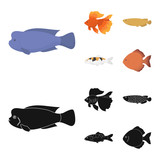 Discus, gold, carp, koi, scleropages, fotmosus.Fish set collection icons in cartoon,black style vector symbol stock illustration web. - 217539620
