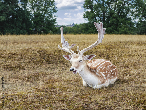 Canvas Hert Deer posing with a smile
