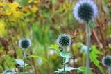 Nature Flower Background