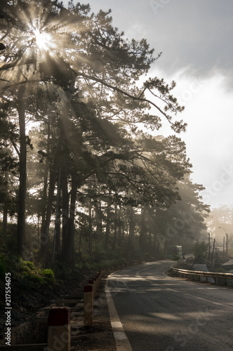 Foto Murales Best of background pine forest with fog and sun rays