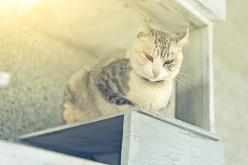 one cat sit