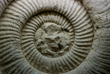 Fossil Ammonite for fuel and gas industry - 217573249