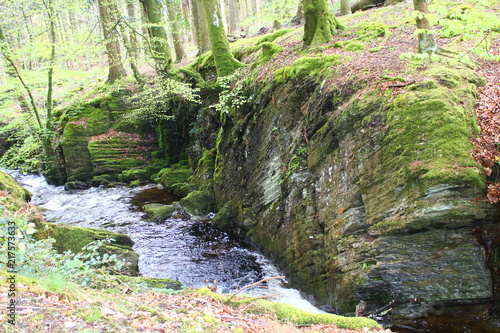 Foto Murales Woodland Forest River Background