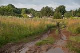 Dirty road trought fields - 217591649