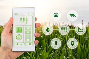 Agritech concept smartphone app with graphic display agricultural icons © lukesw