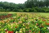 春爛漫の公園の情景 - 217620675