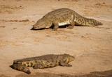 Two crocodiles on a river bank