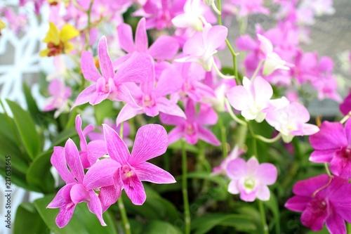 Orchid flower in the garden - 217633645