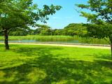 夏の21世紀の森と広場風景 - 217634862