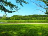 夏の21世紀の森と広場風景 - 217634878