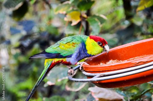 Aluminium Papegaai Parrot Tropical Bird